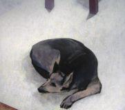 Pies zadumany